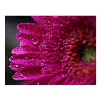 Heißes Rosa-Blume und Tröpfchen-Postkarte Postkarte