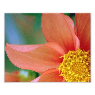 Helle Explosions-Blume Fotodruck