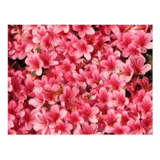 Helle rosa Blumen Postkarte