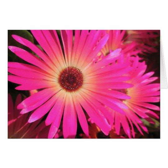 Helle rosa Gänseblümchen Grußkarte