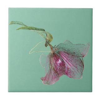 Hellebore-Blume auf tadellosem grünem Türkis Kleine Quadratische Fliese