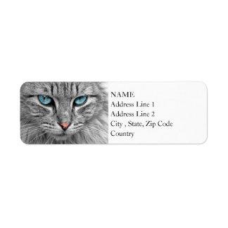 Helles Katzen-Porträt der blauen Augen-| des