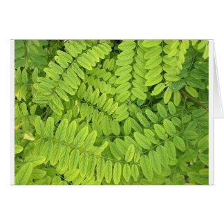 Hellgrünes Blätter und kleine Akazie mit Karte