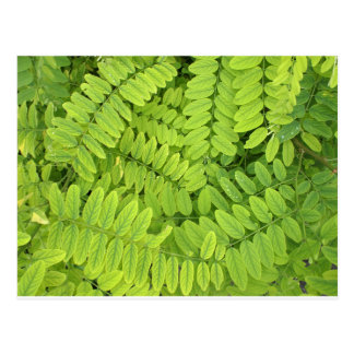 Hellgrünes Blätter und kleine Akazie mit Postkarte