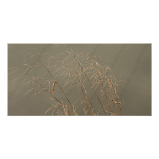 Herbe d'hiver photocarte