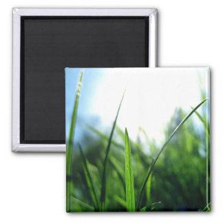 Herbe et ciel bleu magnet carré