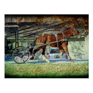 Herbst-amisches Buggy-Pferd Postkarte
