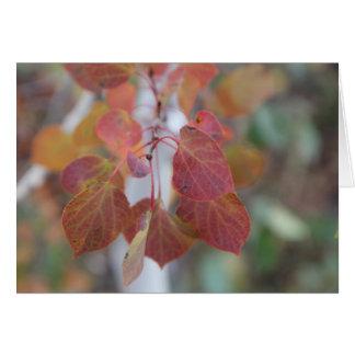 Herbst Aspen verlässt zwei Karte