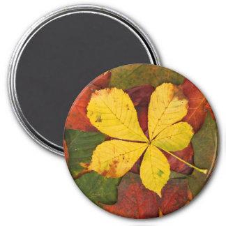 Herbst-Blatt-Magnet Runder Magnet 7,6 Cm