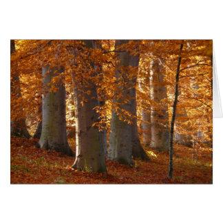 Herbst-Blätter-Fall-Wald Notecards Karte