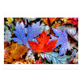 Herbst-Blätter Postkarte