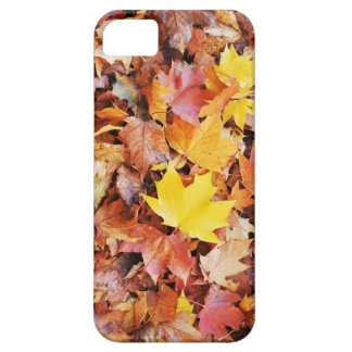 Herbst-Blätter Schutzhülle Fürs iPhone 5