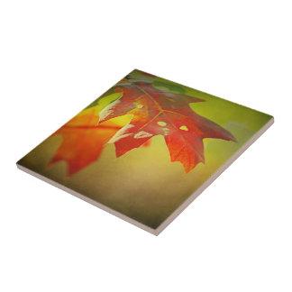 Herbst-Eiche verlässt Keramikfliese