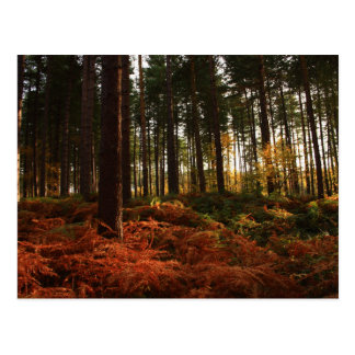 Herbst-Farne Postkarte