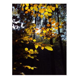 Herbst Postkarte