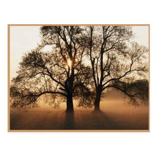 Herbst-Postkarte Postkarte