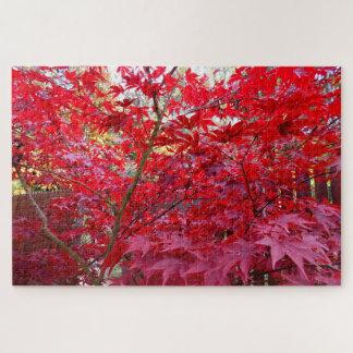 Herbst-Rotahorn-Baum
