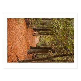 Herbst-Weg Postkarte