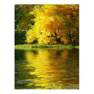 Herbstbaum im Wald mit Reflexion Postkarte
