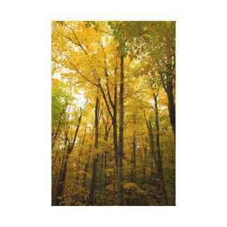 Herbstfarbe, Michigan Leinwanddruck