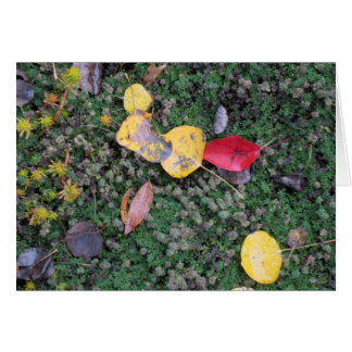 Herbstfarben-Beileids-Karte Karte