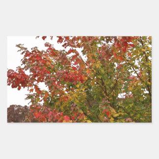 Herbstfarben-Foto-Herbst-Baum-Blätter Rechteckiger Aufkleber