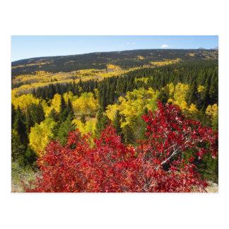 Herbstfarben in Rockies-Postkarte Postkarte