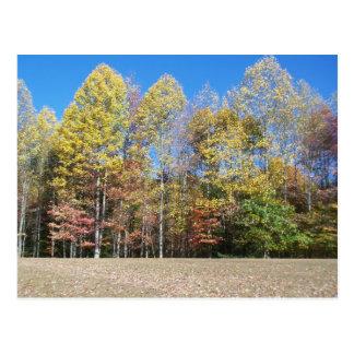 Herbstfarben Postkarte