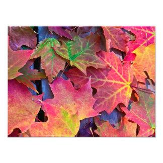 Herbstlaub Fotodruck