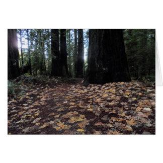 Herbstlaub in den Waldhumboldt-Rothölzern Karte