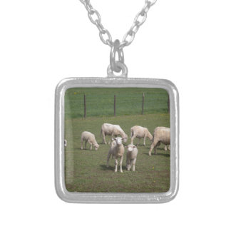 Herde der Schafe Versilberte Kette