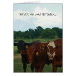 Herde war es Ihre Geburtstags-Kuh-Karte Mitteilungskarte