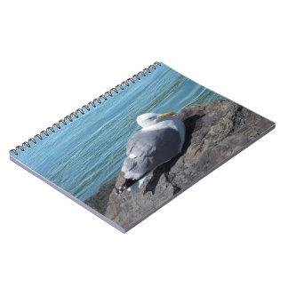 Hering-Möve auf Felsen-Anlegestelle Notiz Buch