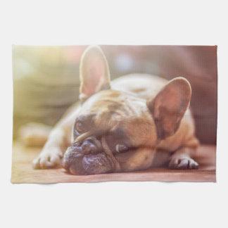 Herrliche französische Bulldogge, die sich hinlegt Geschirrtuch