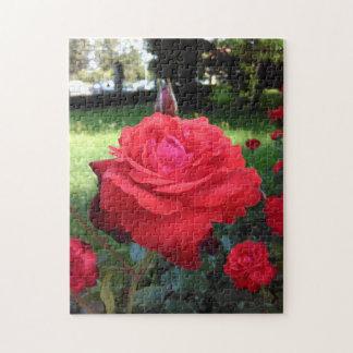 Herrliche Rote Rosen