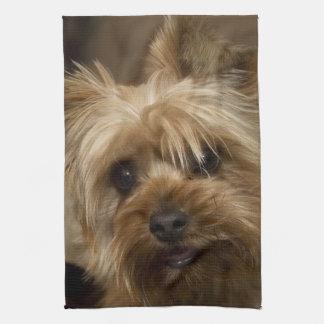 Herrliches Yorkshire Terrier Handtuch