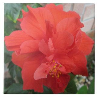 Hibiskus-Pflanzen-rotes Blumen Keramikfliese