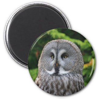 Hibou de grand gris magnet rond 8 cm