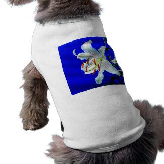 Hintergrund des königlichen Blaus der Blume der Shirt