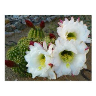 Hinterhof-Kaktus-Blüte Postkarte