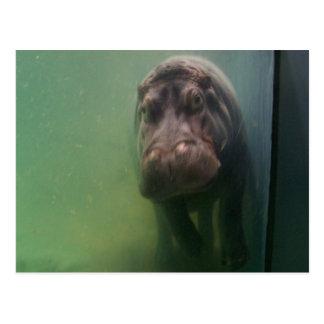 Hippopotamus abstraktes #2 postkarte
