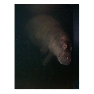 Hippopotamus abstraktes #4 postkarte