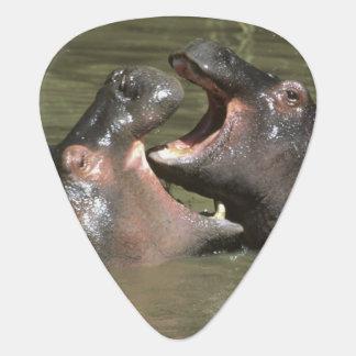 Hippopotamus, (H. amphibius), Mutter u. Junge Gitarren-Pick