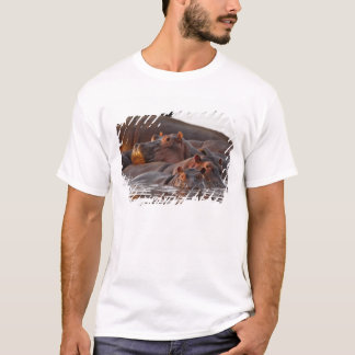 Hippopotamus, Hippopotamus amphibius, See T-Shirt