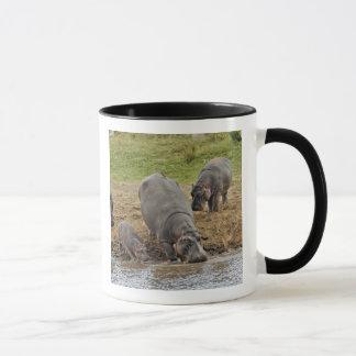 Hippopotamus, Hippopotamus amphibius, Serengeti Tasse