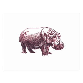 Hippopotamus Postkarte