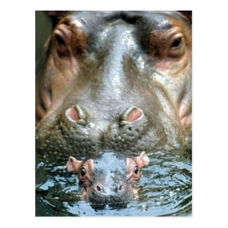 Hippopotamuses und Baby Postkarte
