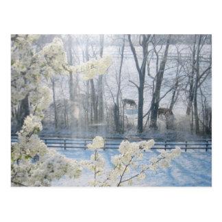 Hirtennatur-Landschaft im Winter Postkarte