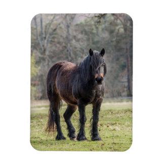 Hochland-Pony Magnet