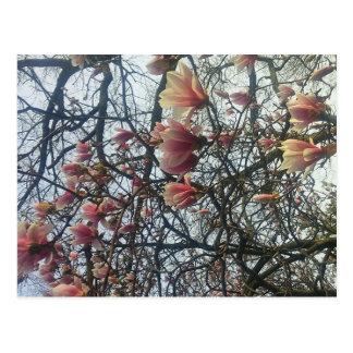 Hoher Park, Kirschblüte 2016 Torontos Ontario Postkarte